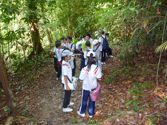fieldstudyworkshops-rainforest-pic1.jpg