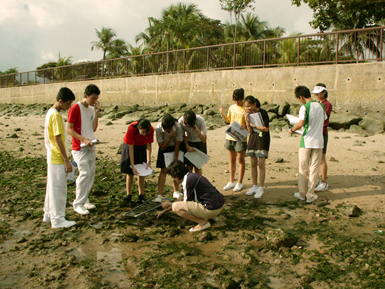 fieldstudyworkshops-intertidal-pic2.jpg